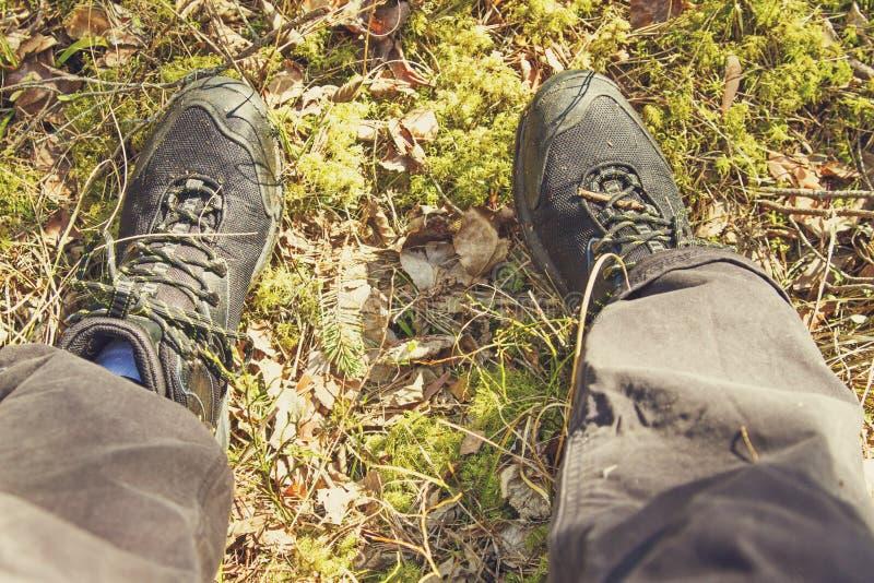 Jambes de randonneur dans les bois images libres de droits