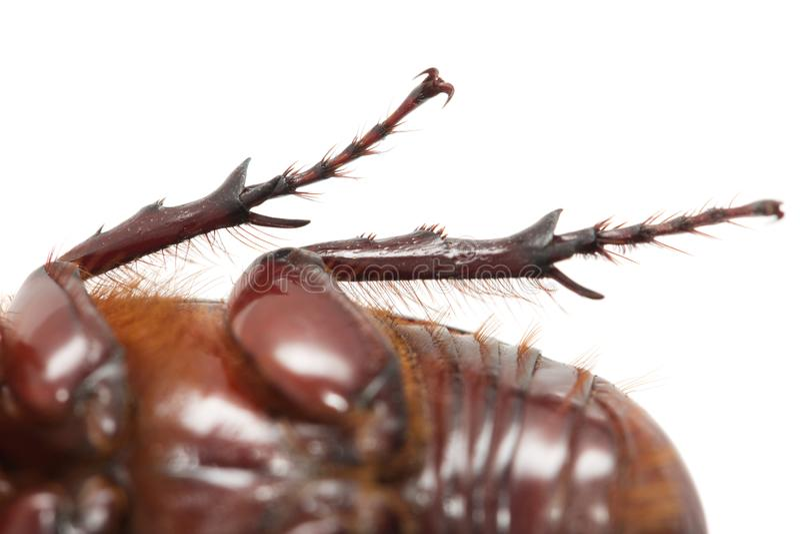 Jambes de scarabée blanches Macro photographie stock