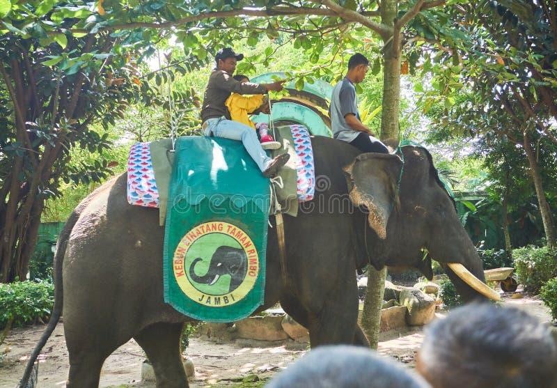 JAMBI, INDONÉSIA - NOVEMBRO DE 2017 : Criança e seu pai gostam de montar um elefante de Sumatra no zoológico em jambi fotos de stock royalty free