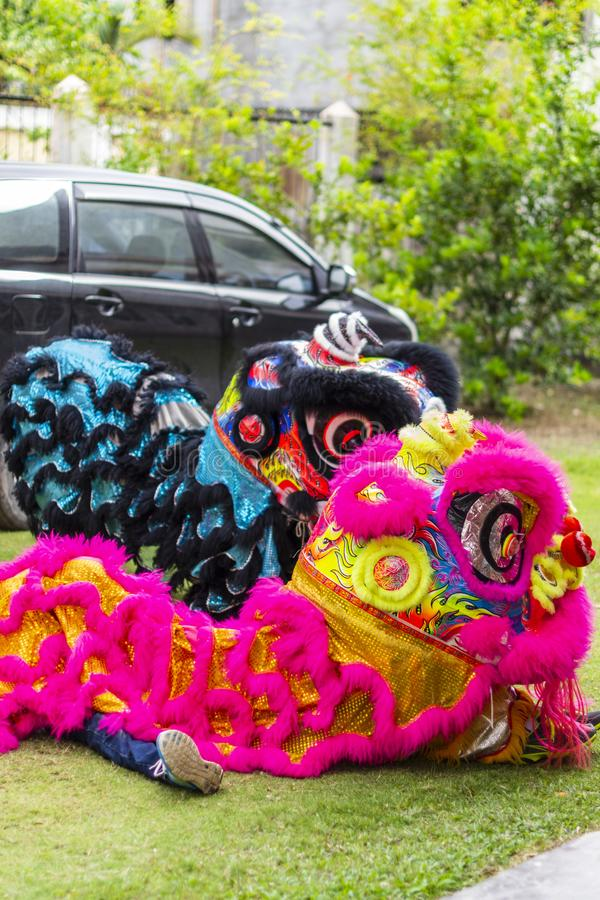 Jambi, Indonesia - January 28, 2017: Lion dance doing acrobatics to celebrate Chinese New Year royalty free stock photos