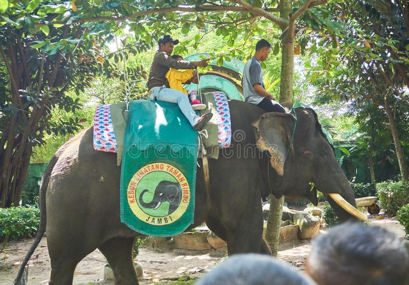 JAMBI, INDONESIA - NOVEMBER 2017 : Child and his father enjoy riding a Sumatran elephant at zoo in jambi royalty free stock photos