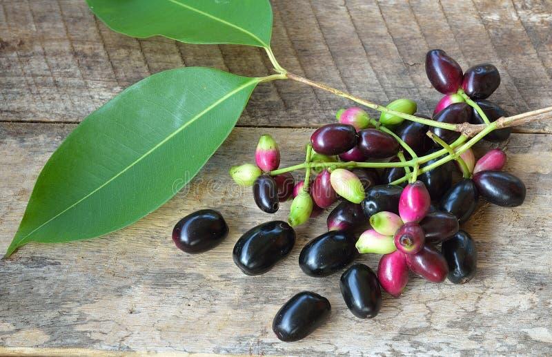 Jambolan plommon, Java plommon på träbakgrund royaltyfri foto