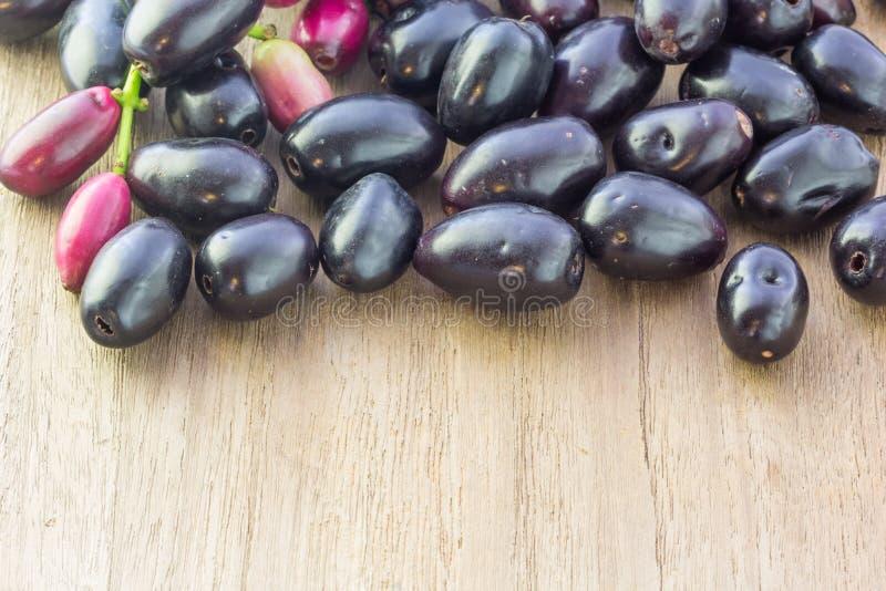 Jambolan plommon, Java plommon (Syzygiumcuminien) fotografering för bildbyråer