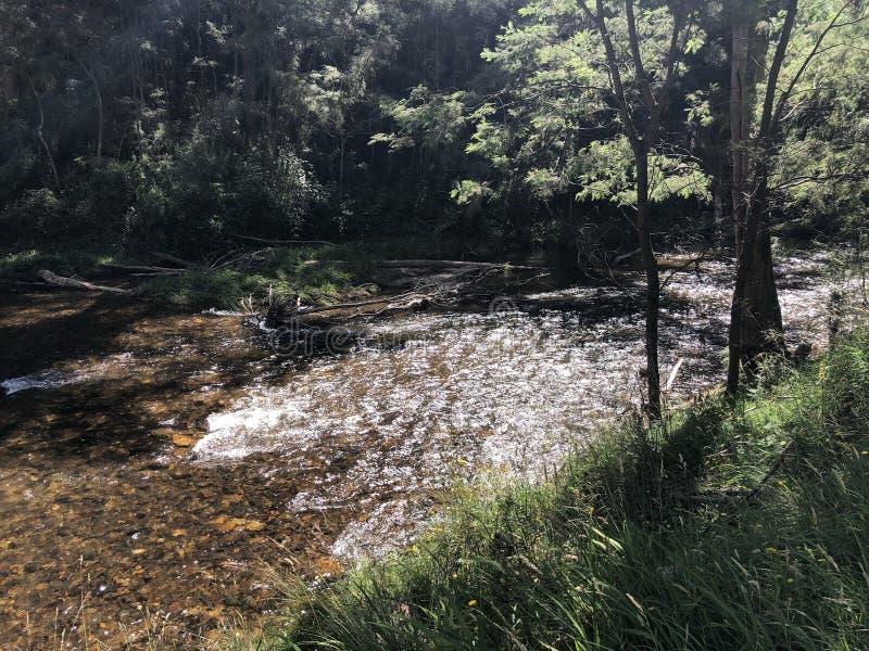 Jamieson River Scene image libre de droits