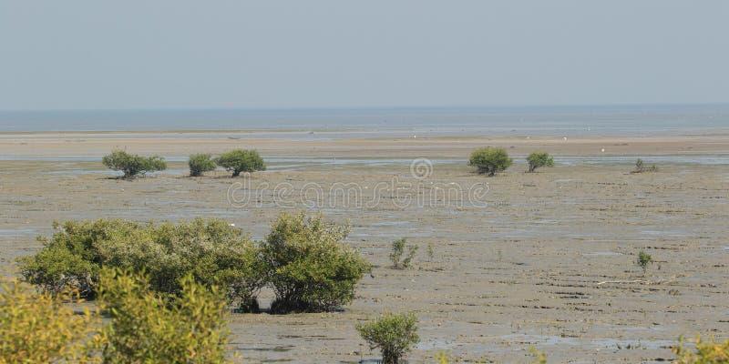 Jamnagar Marine Park - mirando hacia el mar fotos de archivo libres de regalías
