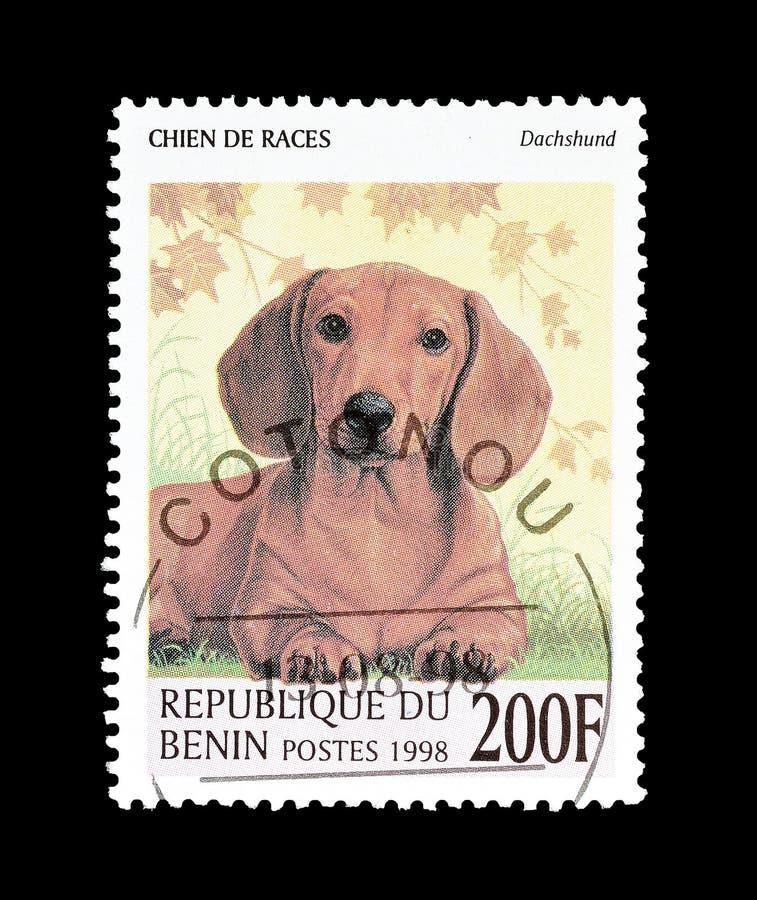 Jamnik na znaczku pocztowym zdjęcie stock