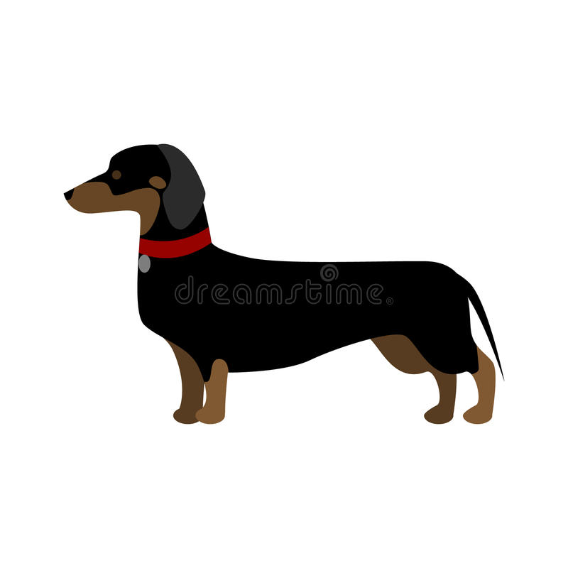 Jamnika pies ilustracji