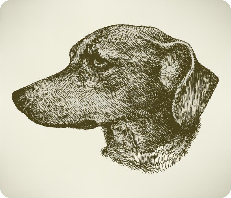 Jamnika psa traken, ręka rysunek.   ilustracji