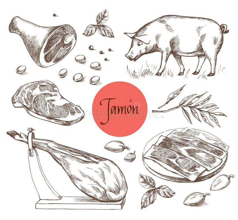 Jamon-Satz Schwarzes iberisches Schwein, Jamon, Fleisch, Rindfleisch, Gewürze für Fleisch Vektorillustration in der Weinlesestich vektor abbildung