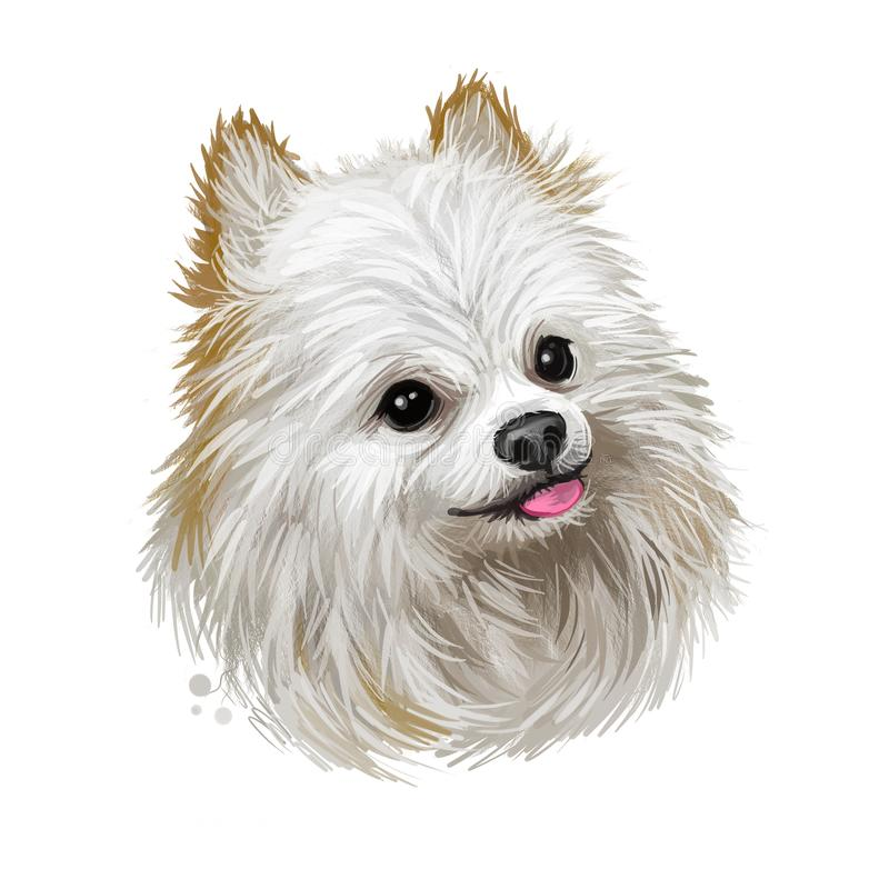Jamthund, Swedish Elkhound, Swedish Moosehound dog digital art illustration isolated on white background. Sweden origin northern vector illustration