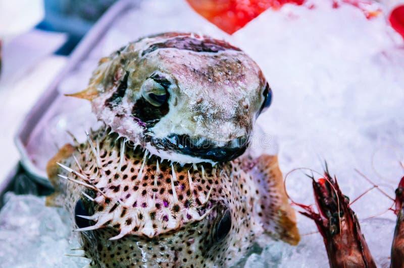Fugu or pufferfish in First Makishi Public Market, Naha, Okinawa stock photos