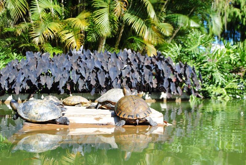 Janeiro rio för 3 de fauna floror