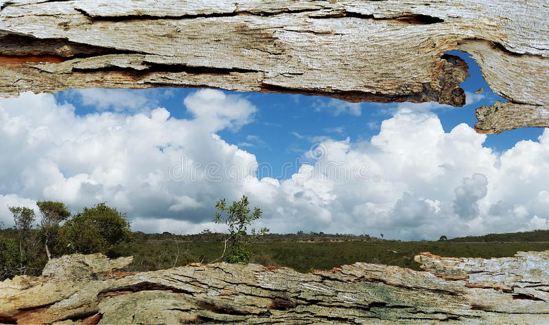 Janela da casca de árvore a Bushland fotos de stock