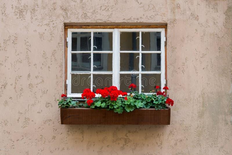 Janela de madeira branca velha com a caixa da flor no fundo concreto foto de stock royalty free