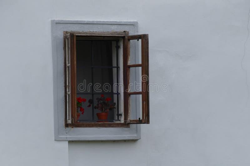 Janela do vintage com pelargonium vermelho imagem de stock royalty free