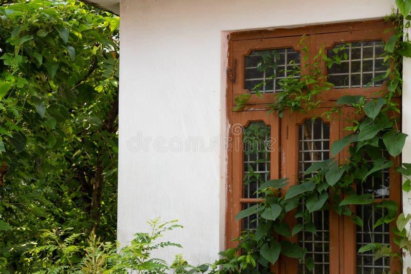 Janela exterior da casa coberta com a videira da folha foto de stock