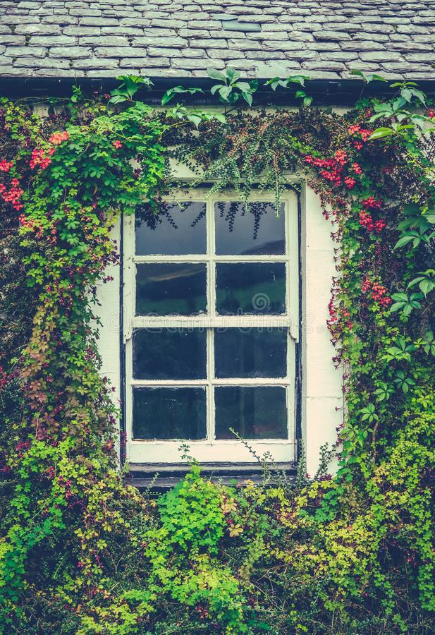 Janela floral da casa de campo fotografia de stock royalty free