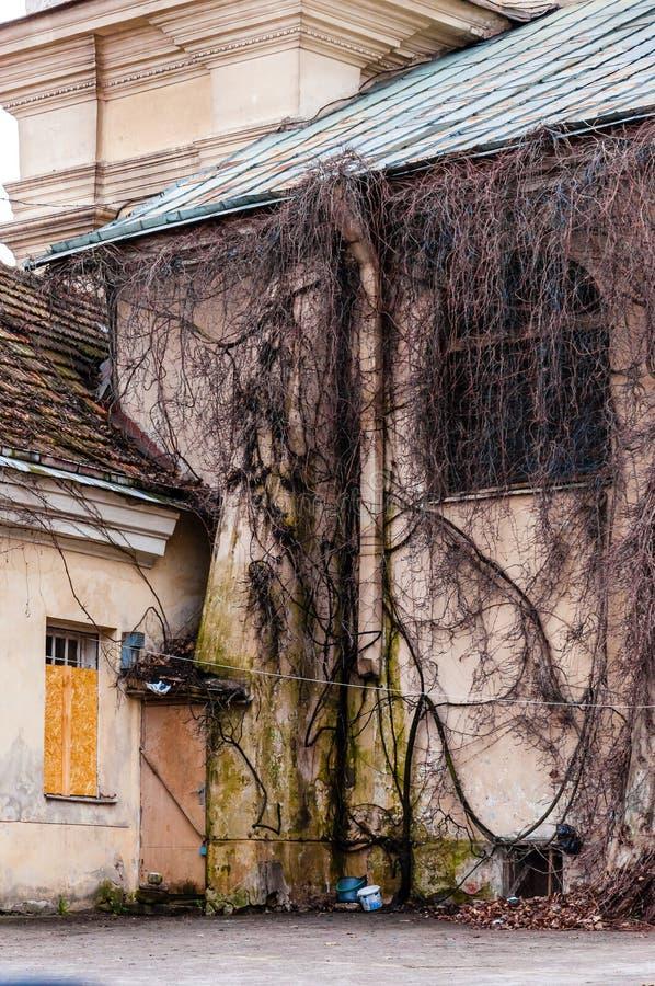 Janela inteiramente coberto de vegetação do arco da fachada com videira selvagem, planta da uva Ramos desencapados assustadores q imagens de stock