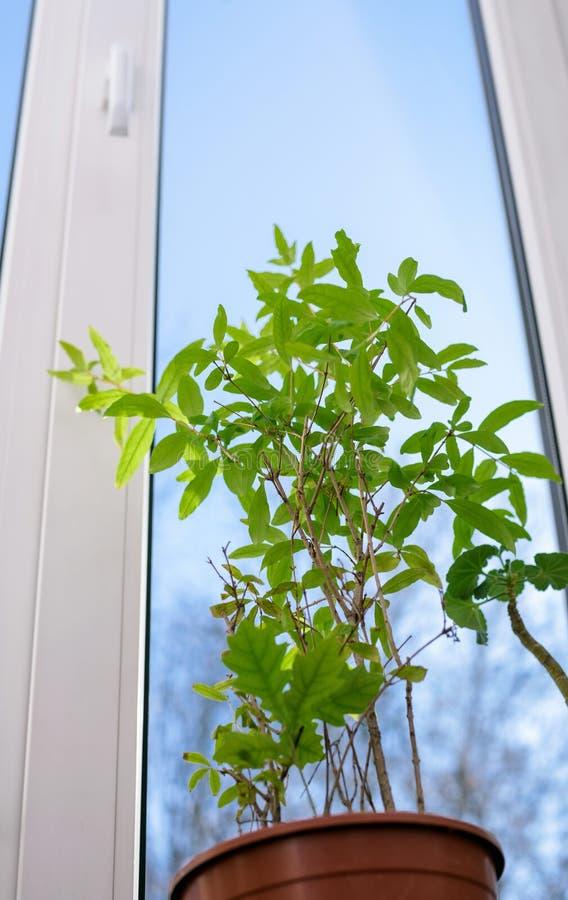 Janela plástica fechado do vinil com planta verde imagem de stock