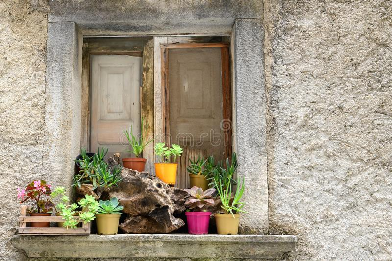 Janela rústica com plantas fotografia de stock royalty free