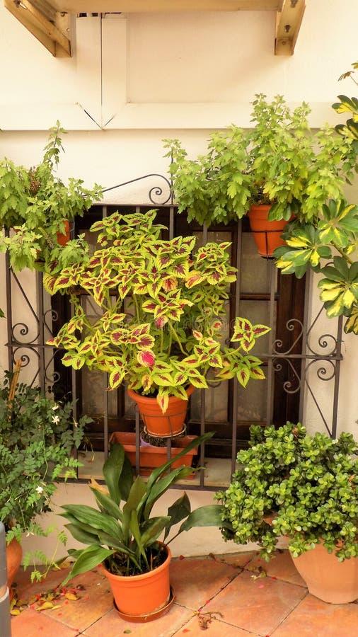 Janela típica com plantas-Benalmadena fotos de stock royalty free