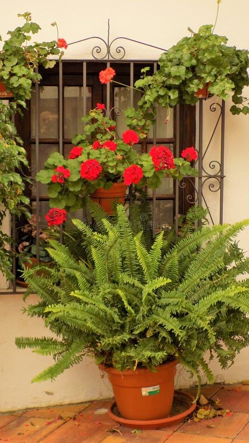 Janela típica com plantas-Benalmadena imagem de stock royalty free