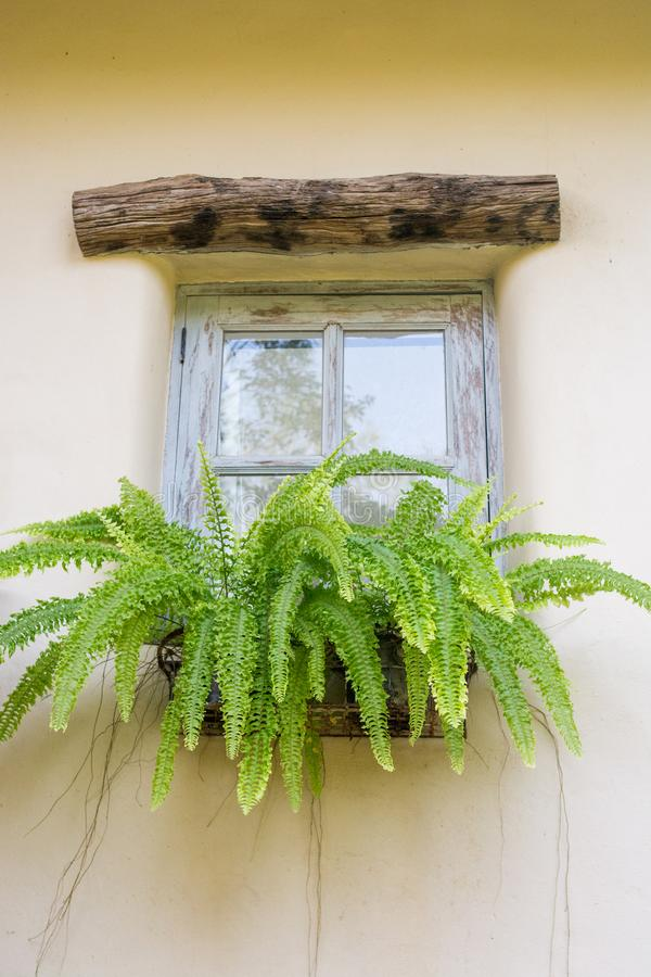 Janela velha com decorações e as plantas em pasta foto de stock royalty free
