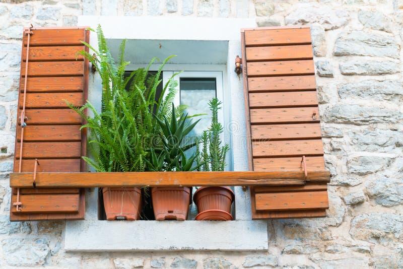 a janela velha com o obturador com plantas fecha-se acima foto de stock royalty free