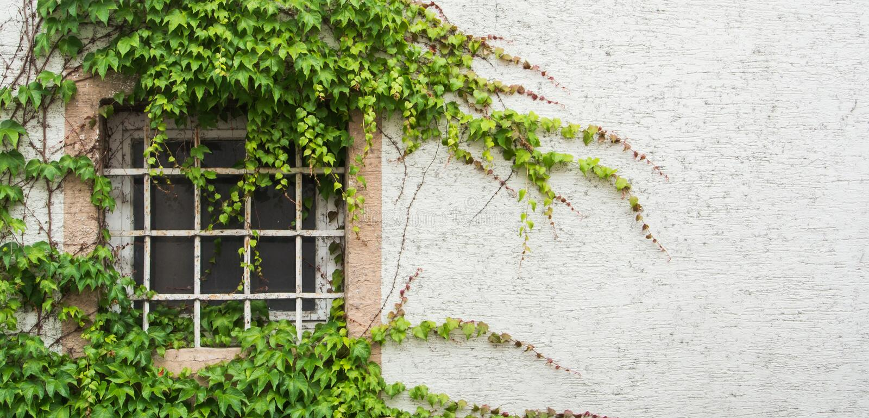 A janela velha com uma estrutura coberta com a uva sae, uma vista minimalistic com um fundo textured branco da parede fotografia de stock royalty free