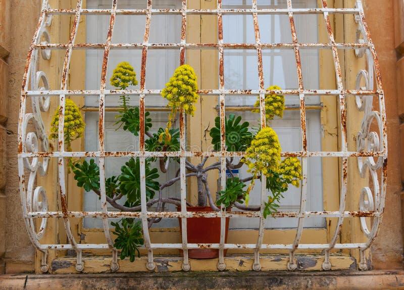 Janela velha e planta barrada fotografia de stock royalty free