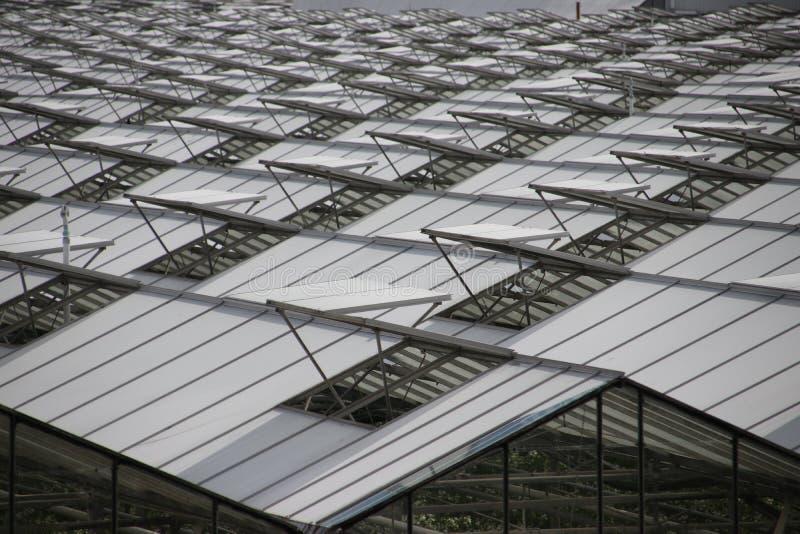 Janelas abertas das estufas em um teste padrão no s-Gravenzande do `, Westland, os Países Baixos imagens de stock