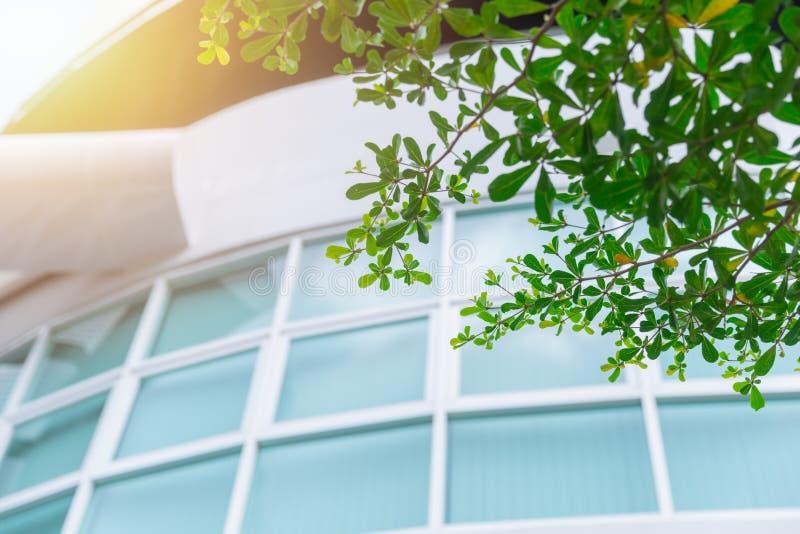 Janelas verdes do escritório da construção do eco imagem de stock