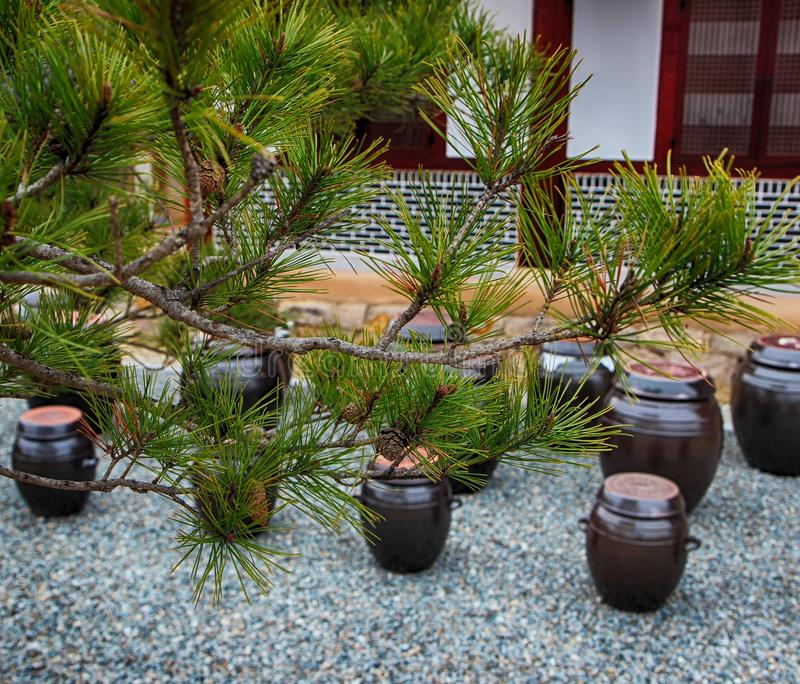 Jangdokdae and Pine Tree in Korean Traditional House in Slow City Changpyeong, Damyang, Jeonnam, South Korea, Asia.  stock photo