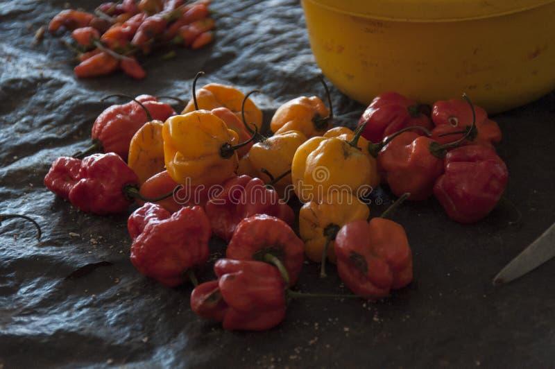 Download Janjanbureh market stock image. Image of travel, vegetables - 83262989