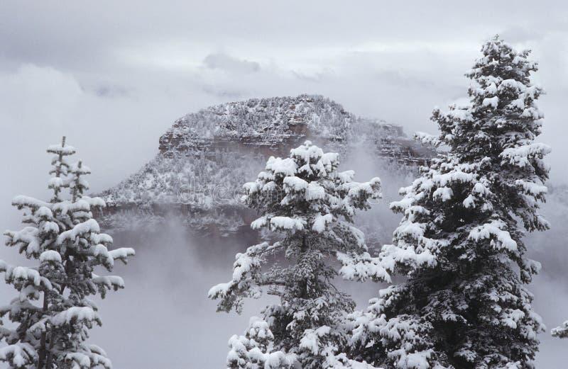 Jante du nord de canyon grand des Etats-Unis Arizona dans la neige images stock