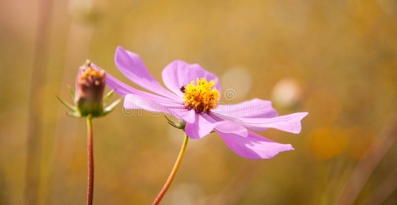 Januar-Blume lizenzfreies stockfoto