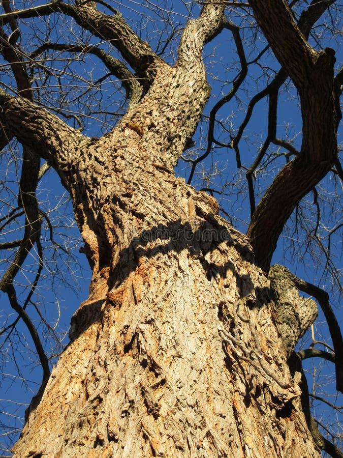 Januari ljus på kalt vinterträd arkivfoto