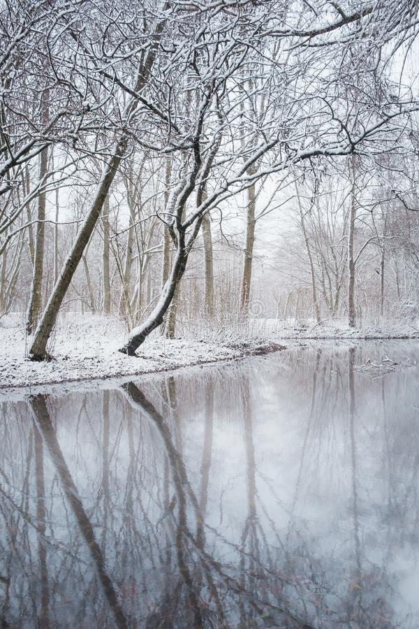 Winter lake in the park, trees covered with snow. January 2019. Winter lake in the park, trees covered with snow. Ansbach, Germany royalty free stock images