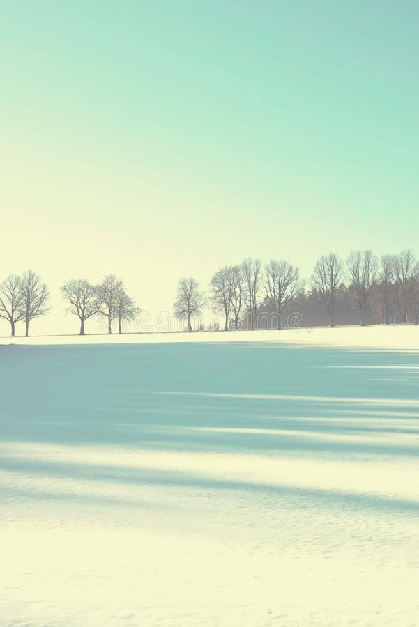 January winter picture with alley tree royalty free stock photography