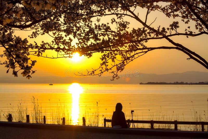 Japão Feng Park Sunset fotos de stock royalty free