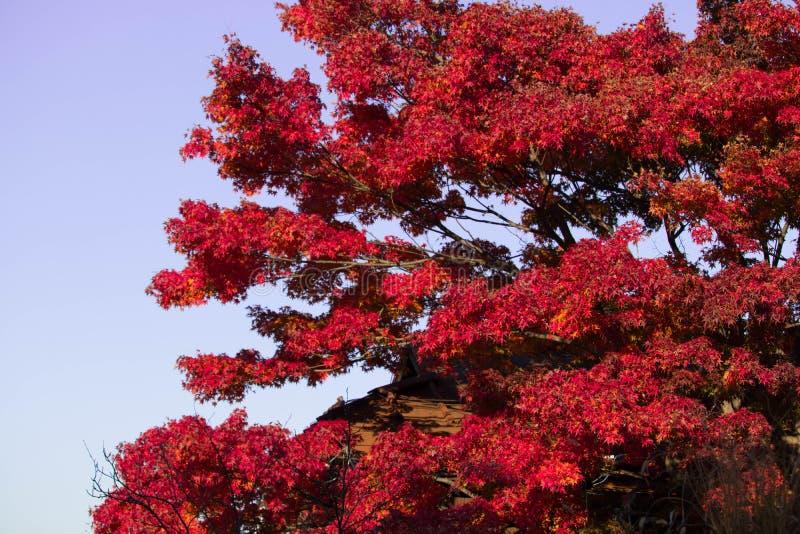 JAPÃO GUNMA imagens de stock royalty free
