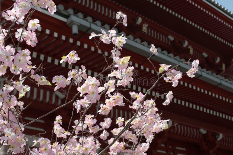 Japón #71 imagen de archivo libre de regalías
