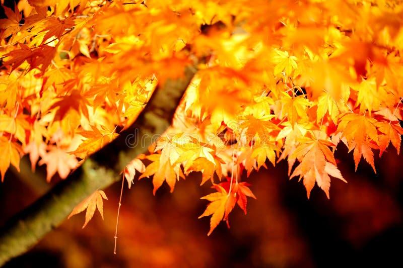 Japón enciende para arriba otoño fotos de archivo