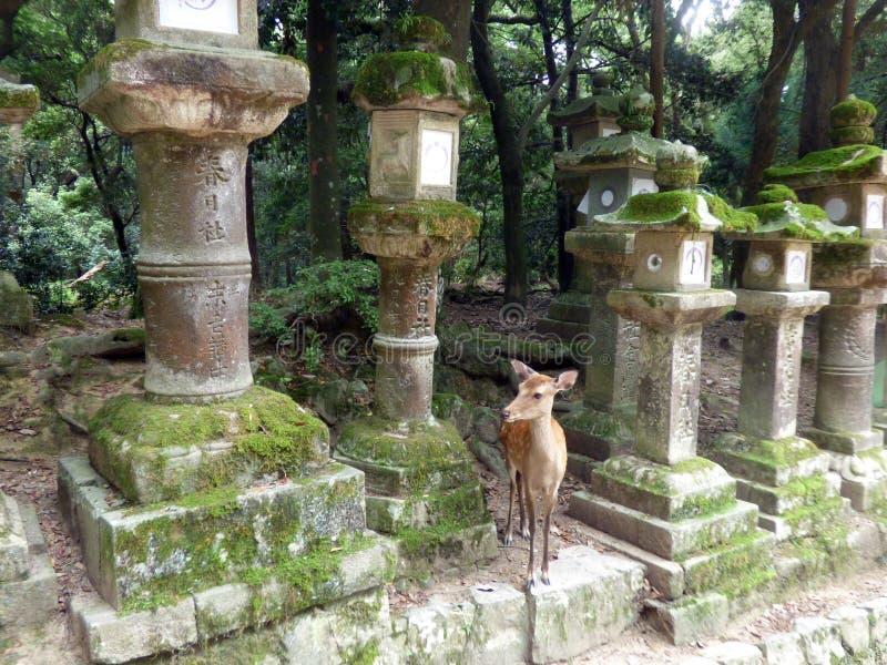 japón estrechez Templo de Todaiji imágenes de archivo libres de regalías