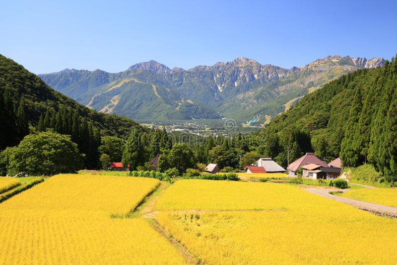 Japan-Alpen und Reisfeld stockbilder