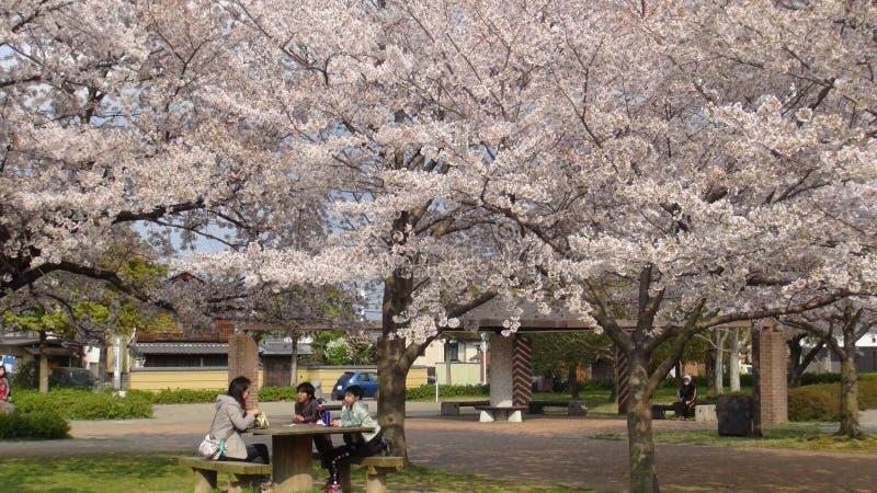 Japan Cherry Blossom Tree royalty-vrije stock fotografie