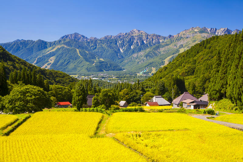 Japan fjällängar och risfält royaltyfria bilder