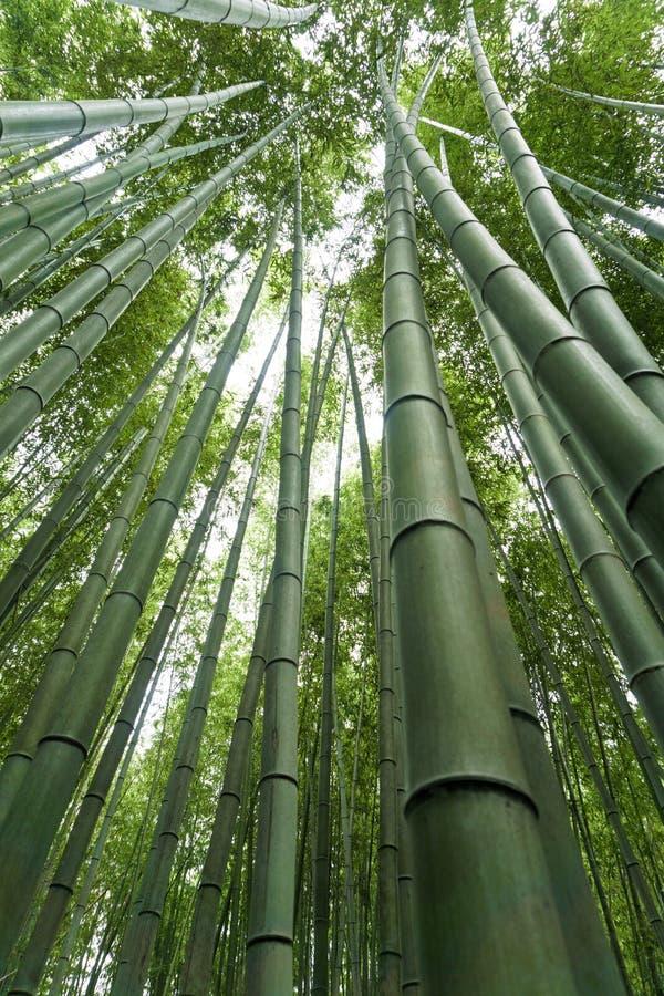 Japan, Kyoto, Arashiyama, mening van het bamboebos stock fotografie