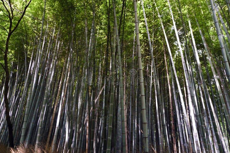 Japan, Kyoto, Arashiyama, mening van het bamboebos stock foto