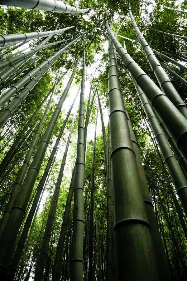 Japan, Kyoto, Arashiyama, mening van het bamboebos stock foto's
